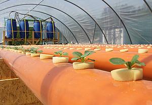 Spinatpflanzenanbau Pilotanlage HypoWave